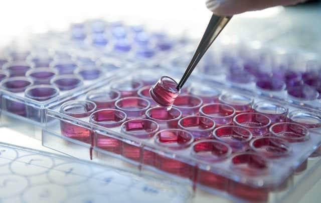 kosmetyki pielęgnacyjne hodowla komórek skóry